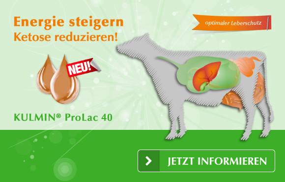 ProLac 40 – Energie steigern, Ketose reduzieren